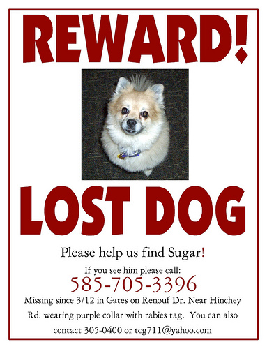 Lost Pet Flyers  BesikEightyCo